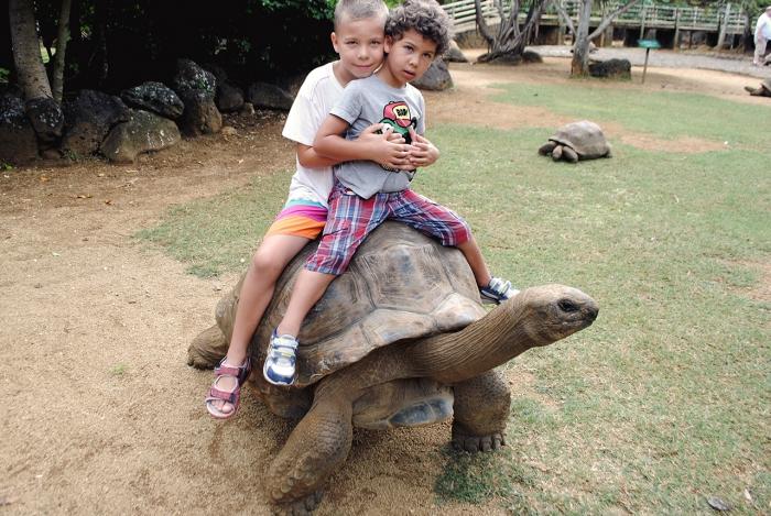 Barn på sköldpadda